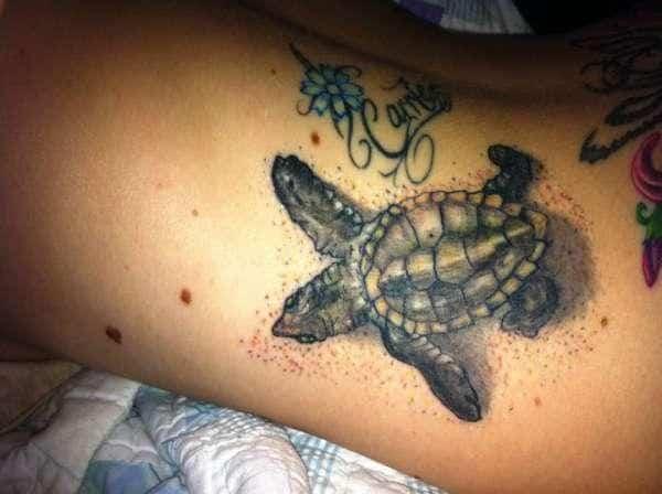 brown-turtle-on-back