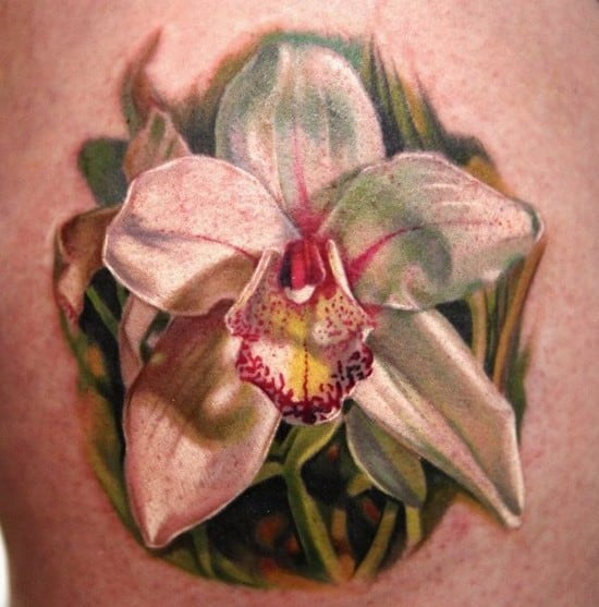 orchid_dongkyulee