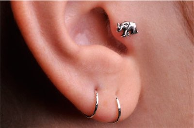 elephant tragus piercing